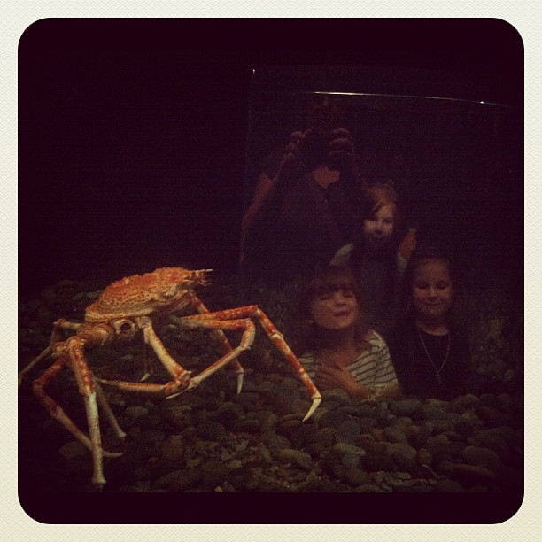 Large crab. Tiny children.