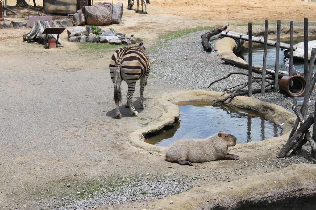 とくしま動物園_20120504
