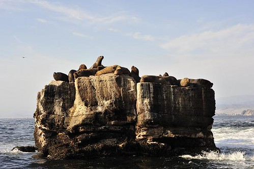 Sea lion rock in Pucusana - Sea kayaking with Nature Expeditions in Peru