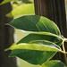 Small photo of Leaf edge