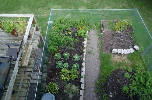 Kitchen garden progress