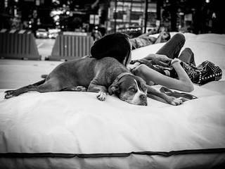 A Comfy Pillow