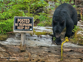 Black Bears cannot read 1CGS3244