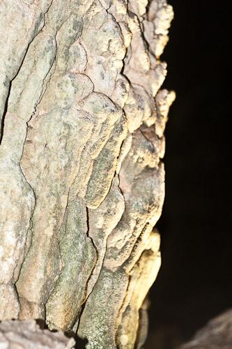 Limestone formation 1