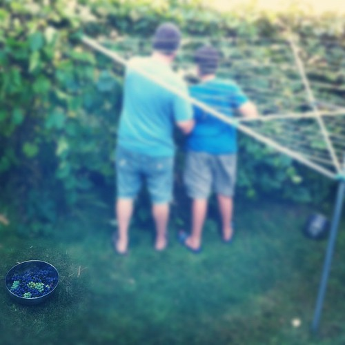 two grape guys #unschooling #organicgarden #urbangarden #harvest