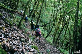 Bosque del Cedro (La Gomera).
