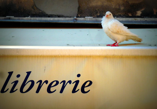 Una colomba - foto 6