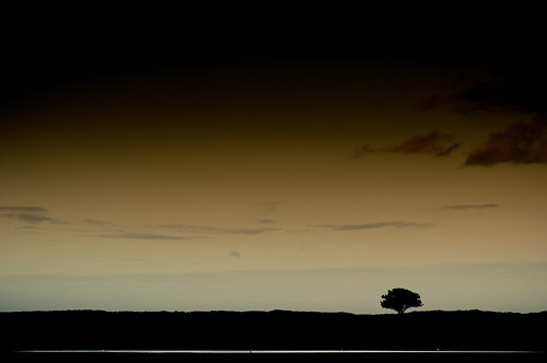 ireland sea dublin tree landscape lone solitary
