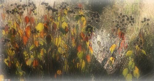 spiderweb pa harrisburg morningdew wildwoodlake morningdewonweb canoneosrebelt2i shannonroseoshea