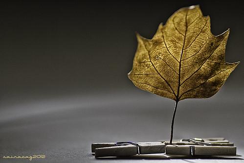 319/365 Recuerdo de un otoño by sairacaz