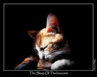 The Sleep Of The Innocent / Le Sommeil de l'Innocent