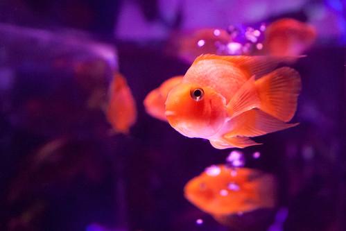 Suspicious Fish