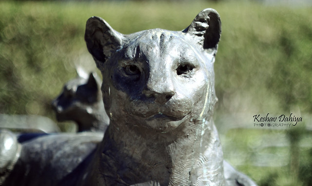 Lake Poway Cat Sculpture