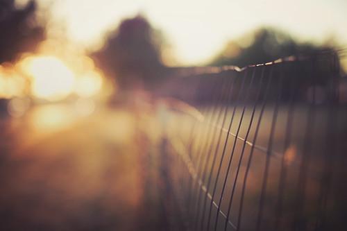 light sun canon fence 50mm dof bright bokeh anacortes hff fencefriday happyfencefriday fencedfriday
