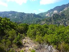 Chemin de la Montagne aux Plages : arrivée à Livisani avec le Finicione et le Castellucciu