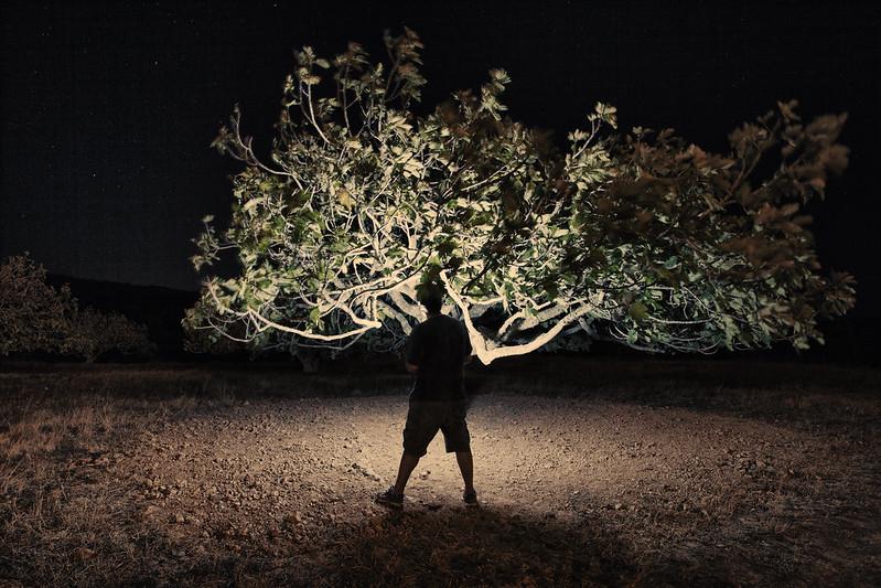 figueira atómica . atomic fig tree