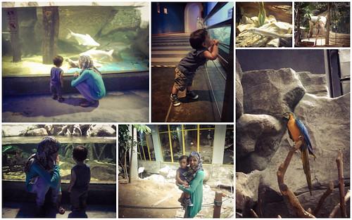 Langkawi_Collage (21 of 30)