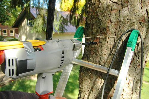 how to drill a two foot hole through a tree. I.