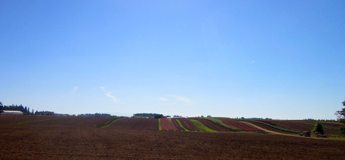 Stripey fields near Orient