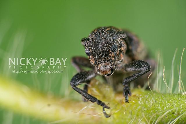 Longhorn Beetle (Cerambycidae) - DSC_7586