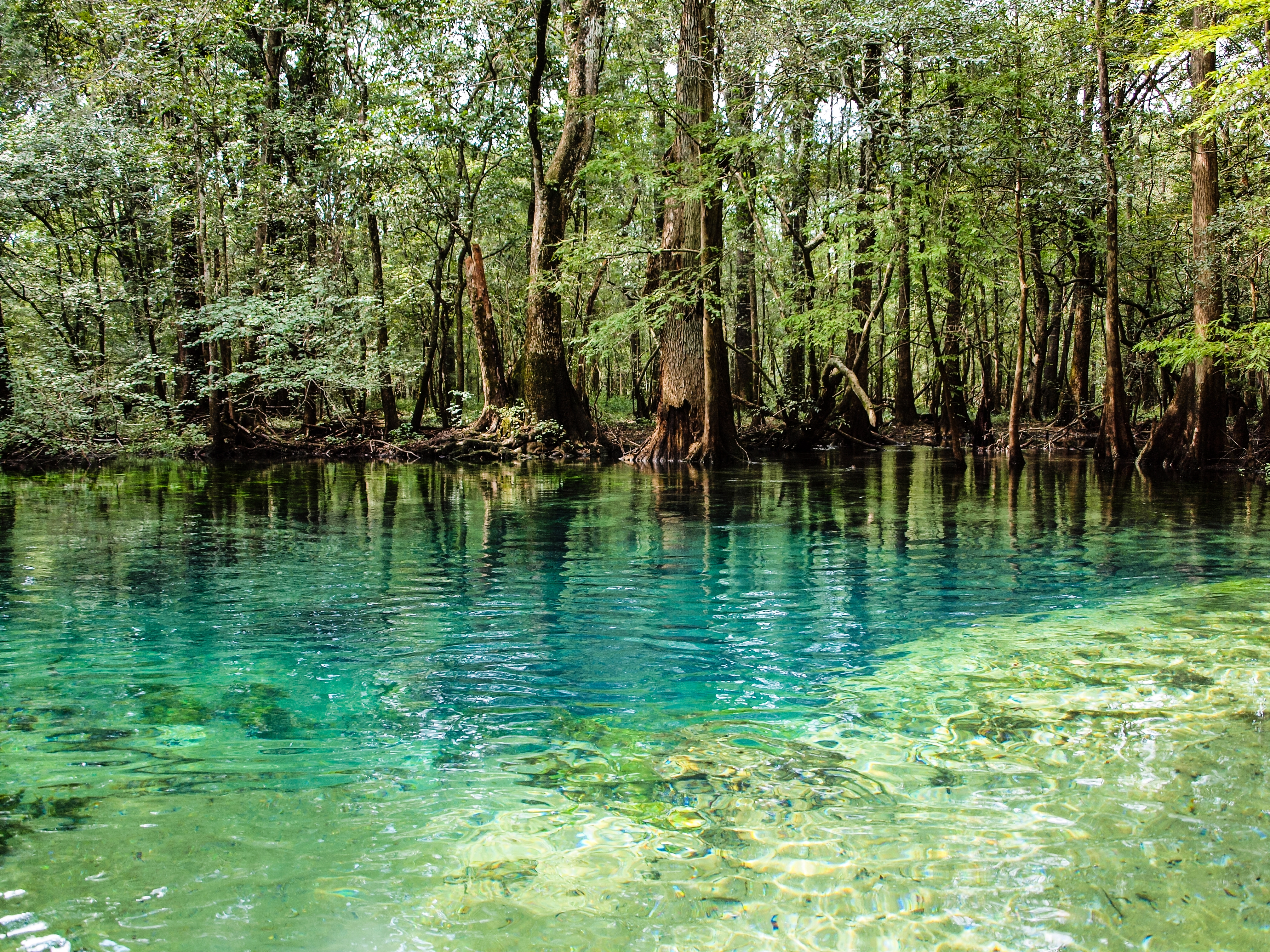 Florida Freshwater Springs Map.Elevation Of Cottondale Fl Usa Topographic Map Altitude Map