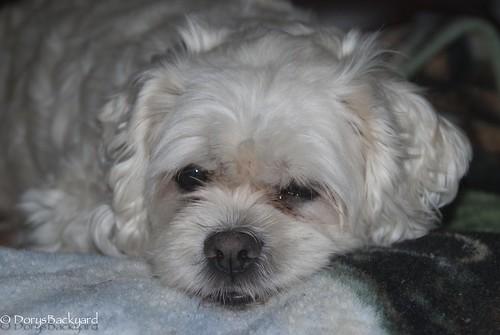 DogBlogWE101512-26-2