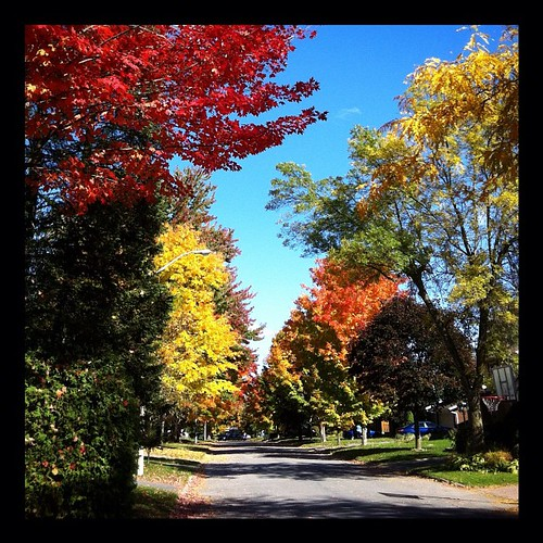 This is likely the most colourful street I will see this #fall in #Ottawa. #Autumn