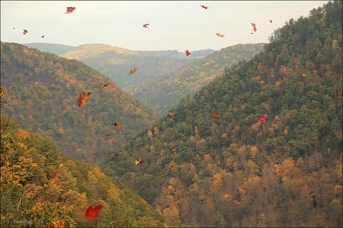 autumn pennsylvania grandcanyon autumnleaves winds pinecreek gust zormsk tiogacounty pawilds