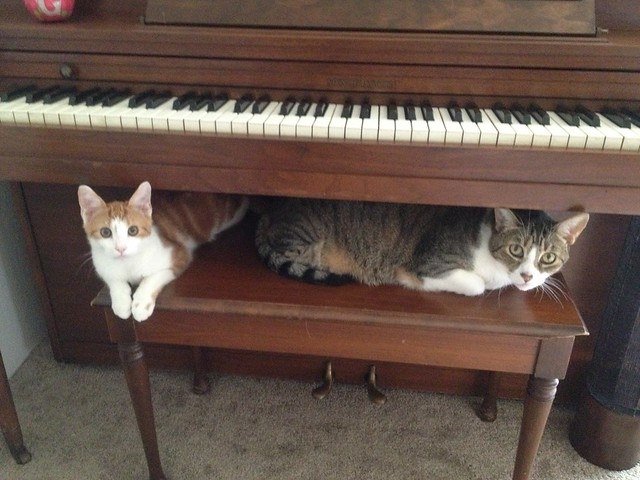 Piano kitties