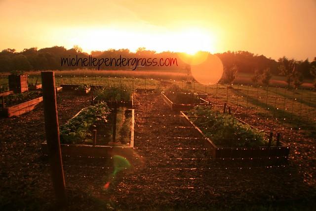 garden sunset2