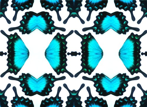 Butterfly kaleidoscope - real wing photographs by PoPkO!