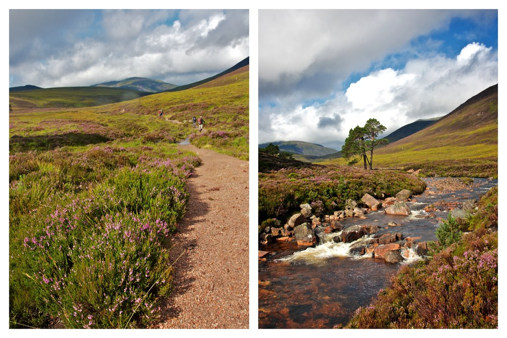 Summer in the Cairngorms I