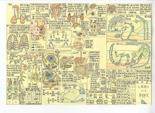 全彩生物大圖