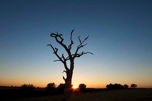sunset tree silhouette dead tramonto