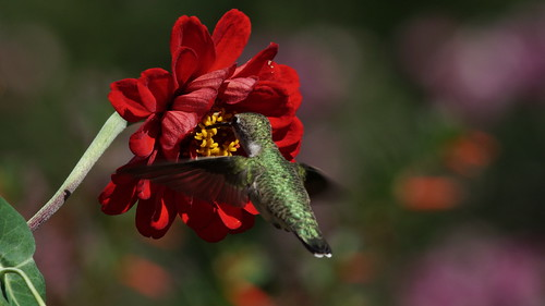 Big flower Little bird by conniee4