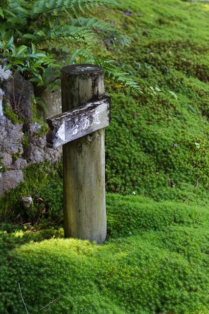 Nara garden_2