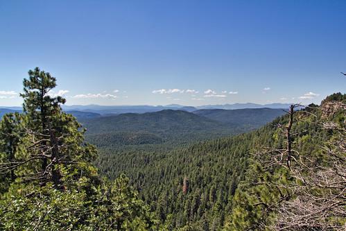 arizona landscape view az roadtrip pines ponderosa mogollonrim