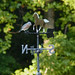 Blue Bird on Weather Vane
