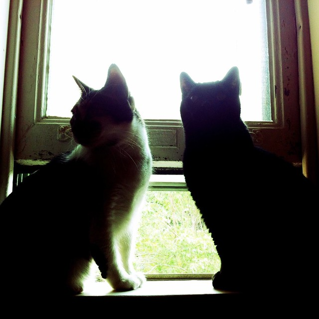 cats on their new window sill