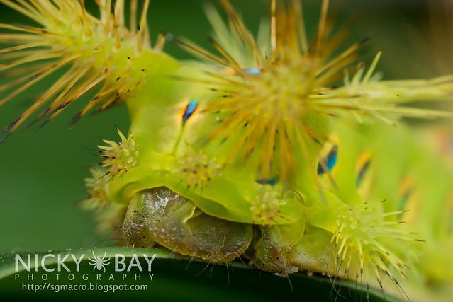 Caterpillar - DSC_2168