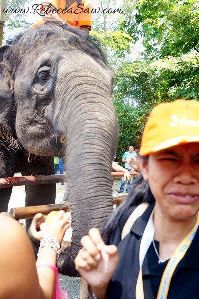 Malaysia Tourism Hunt 2012 - National Elephant Conservation Centre -002