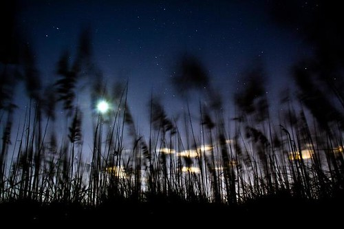Moon, stars, wind, grass and dunes on a beautiful September evening. Stargazing on 83rd Street in Virginia Beach, VA. Photo by Mackenzie Brunson
