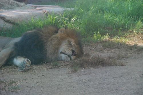 San Diego Zoo Safari Park 042