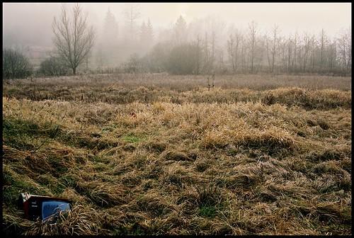 film tv 2006 macska nikonf90x fujisuperia400 tél farkasfa hideg negatív nikkor3580mm évvége