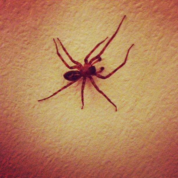 Went to get my phone from my bag and this #spider was on the #wall