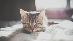 [フリー画像素材] 動物 1, 猫・ネコ, 子猫・小猫 ID:201210021000