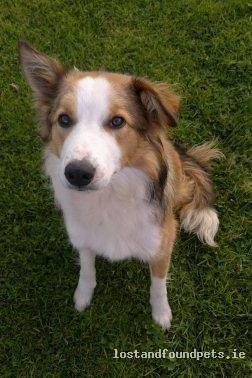 [Finder Keeping Pet] Mon, Oct 1st, 2012 Found Male Dog - Barnadown, Barnadown, Hugginstown, Kilmaganny, Newmarket, Kilkenny