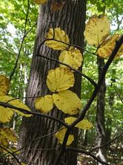 日, 2012-09-16 13:06 - Lenape Trail