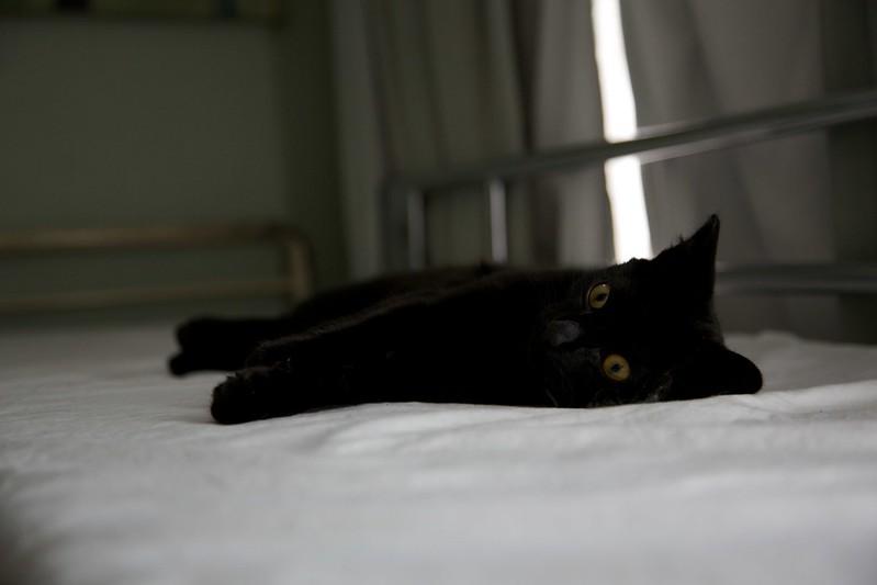 weetzie cat