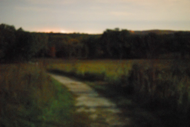 Shaw Nature Reserve (Arboretum), in Gray Summit, Missouri, USA - severely blurred and impressionistic image of prairie
